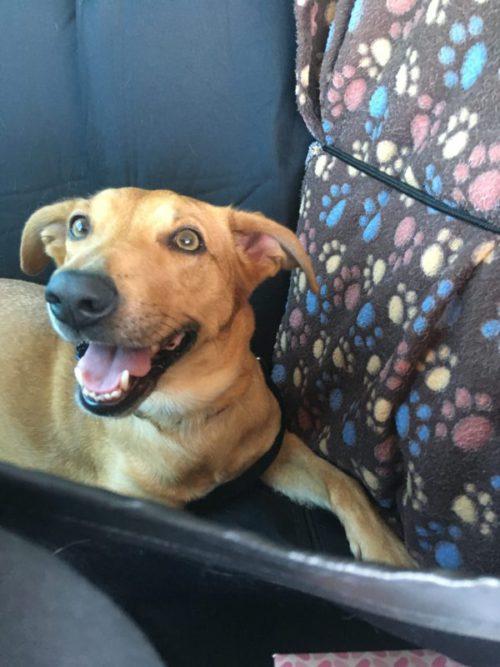 Spokojená Emily v autě